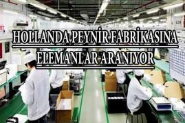 Hollanda peynir fabrikasına elemanlar aranıyor