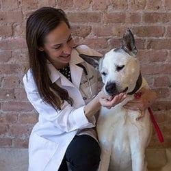 West Loop Veterinary Care